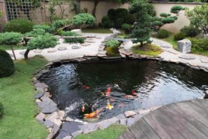 Garden Pond Plants & Fish